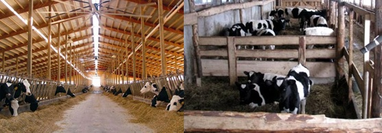 ферма бизнес-план