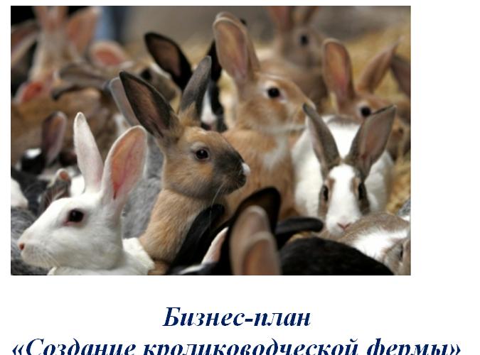 Бизнес-план «Создание кролиководческой фермы»