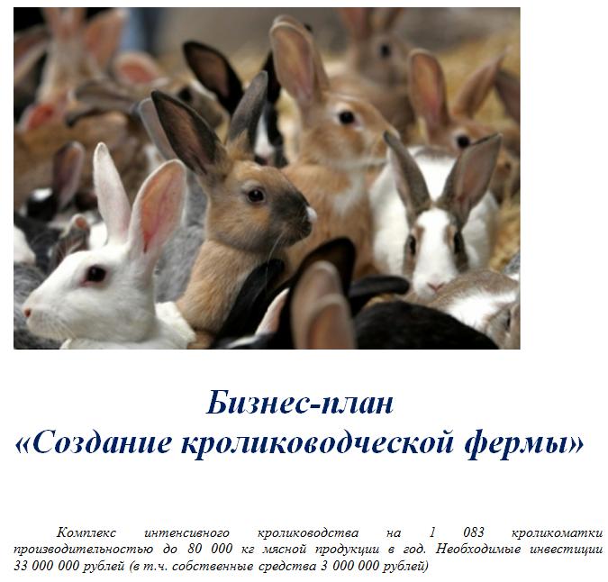 бизнес-план кролики3
